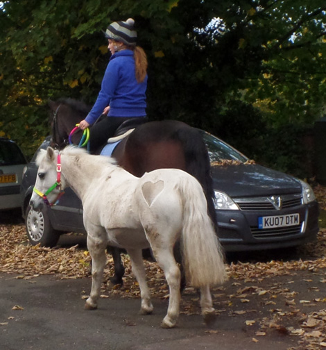 horse & pony